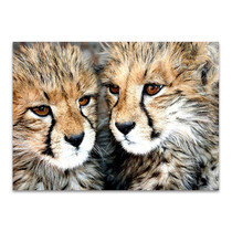 Cheetah Cubs Wall Art Print