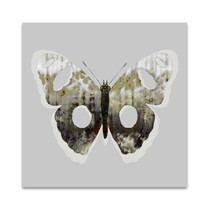 Painted Butterfly II Wall Art Print