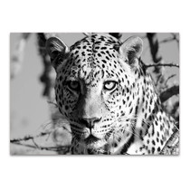 Wildlife Leopard Wall Art Print