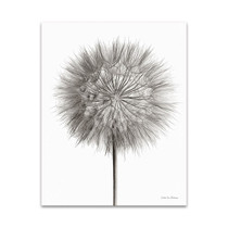 Dandelion Fluff on White Wall Art Print