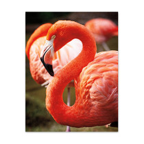 Flamingo III Wall Art Print