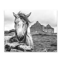 Ireland Horse Wall Art Print