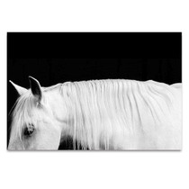 White Horse on Black I Wall Art Print