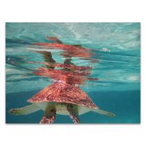 Belize Turtle Wall Art Print