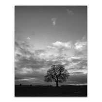 Horizon Tree Wall Art Print