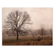 Morning Calm IV Wall Art Print