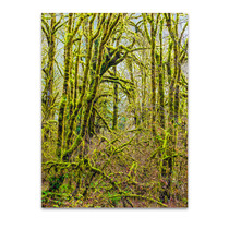 Trees V Wall Art Print