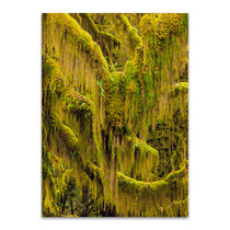 Trees VI Wall Art Print