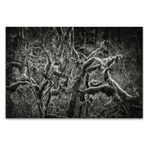 Lowland Winter Forest Wall Art Print