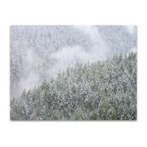 Snowy Trees Wall Art Print
