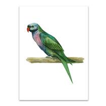 Bird IV Wall Art Print