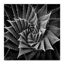 Succulent I Wall Art Print