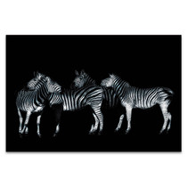 Monochrome Wildlife Portrait Art Print