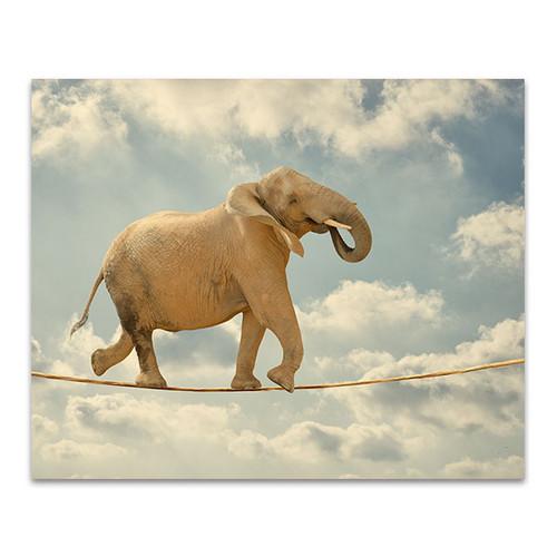Elephant Walking On Rope Wall Print