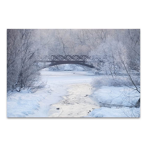 Frosty Morning Art Print