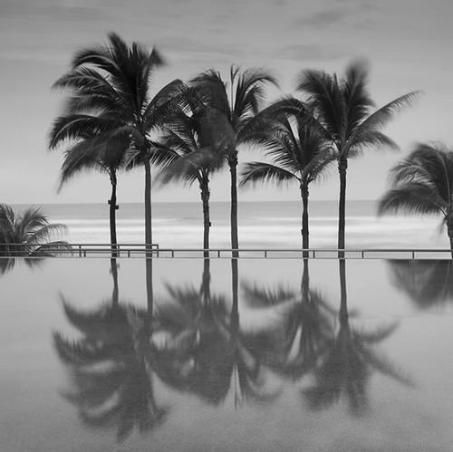 Palm Trees Serenity Wall Art Print