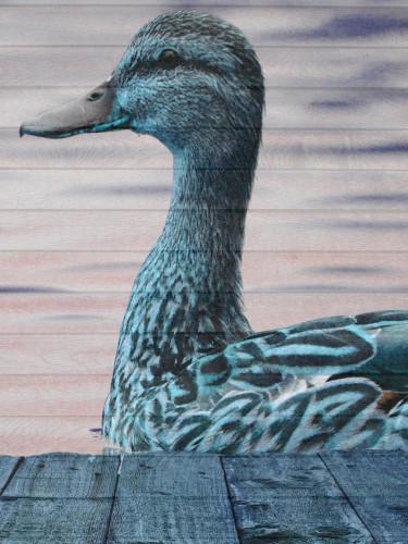 Aqua Duck Wall Art Print