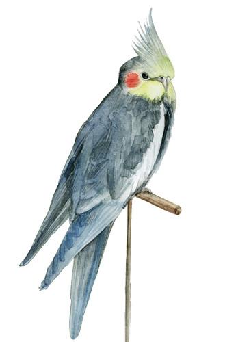 Bird I Wall Art Print