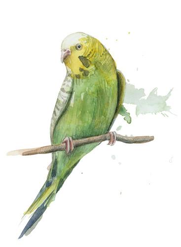 Bird II Wall Art Print