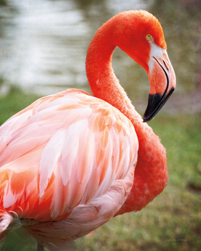 Flamingo I Wall Art Print