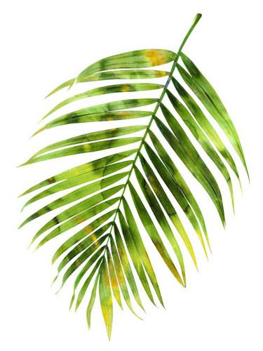 Palm I Wall Art Print