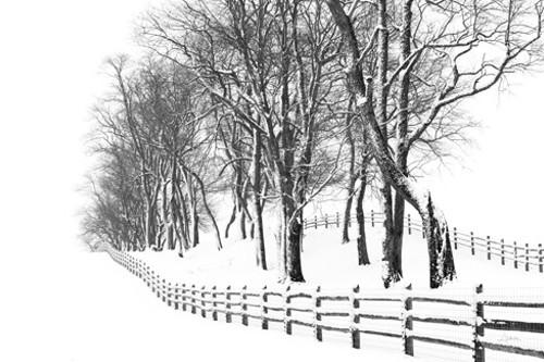 Winter Wonderland Wall Art Print
