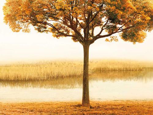 Golden Morning I Wall Art Print