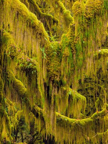 Trees VI Wall Art Print