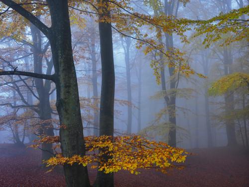 Autumn Forest Wall Art Print