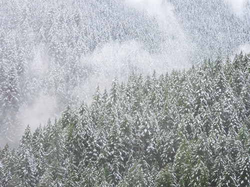Snowy Trees Wall Art Print