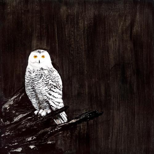 Owl Wall Art Print