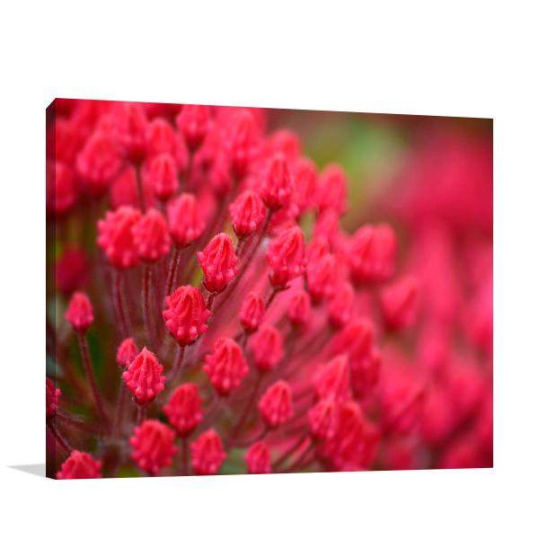 Pink Flower Wall Art Print