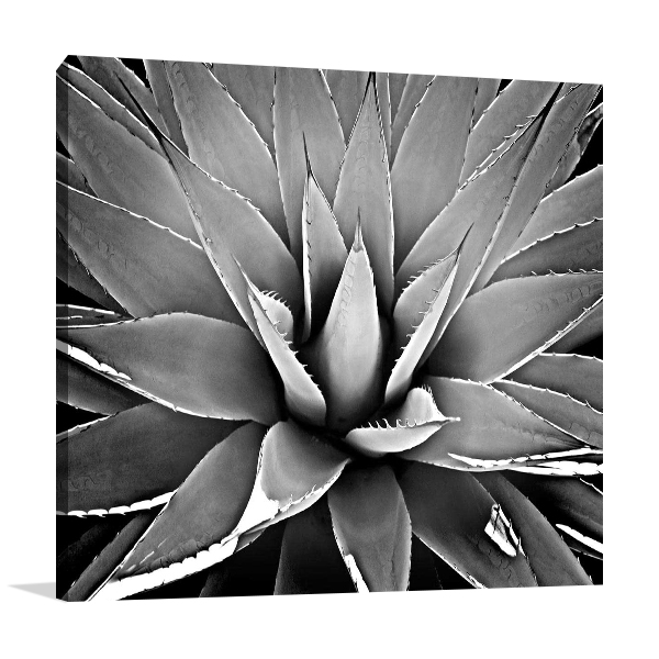 Succulent III Wall Art Print