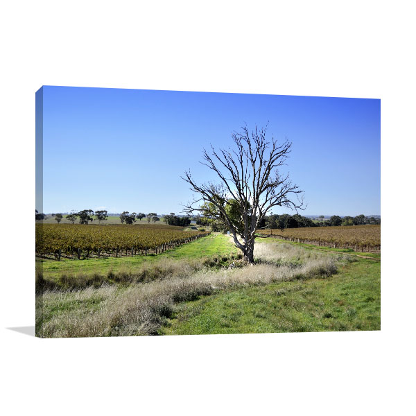 Adelaide Art Print Clare Valley Vineyard