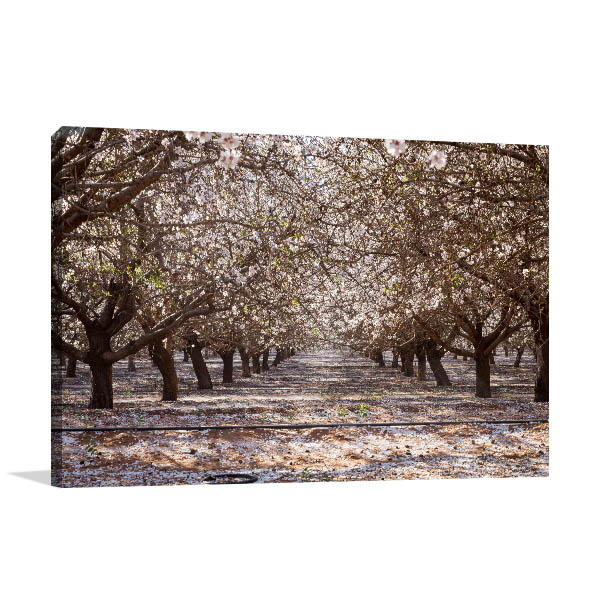 Adelaide Canvas Print Almond Blossom