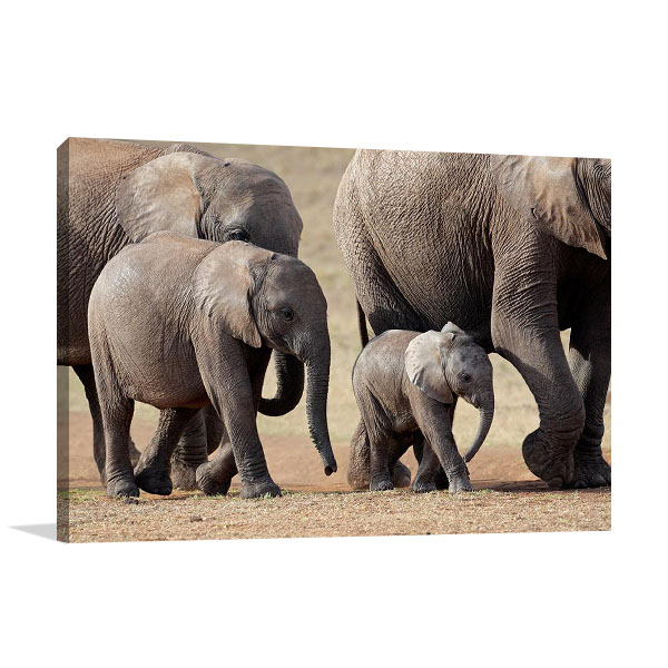 Animal Family Canvas Print