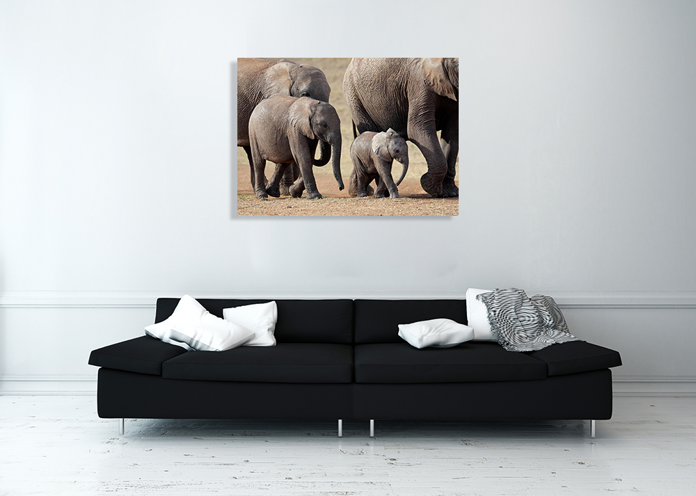 African Animal Wall Canvas Print
