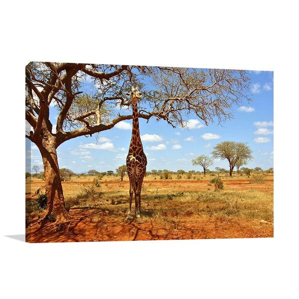 African Giraffe Wall Print