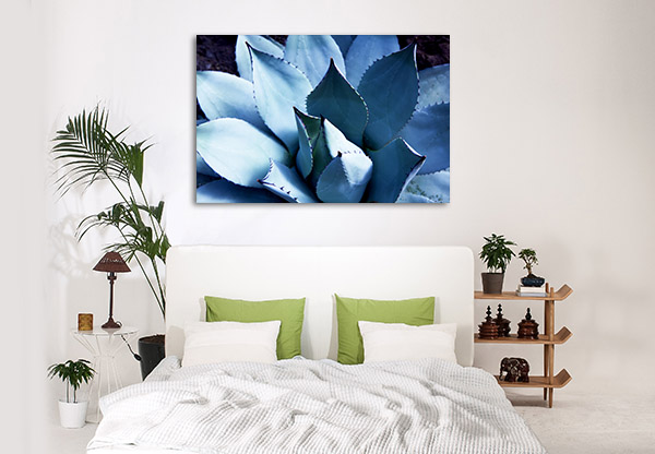 Agave Cactus Plant Print Artwork