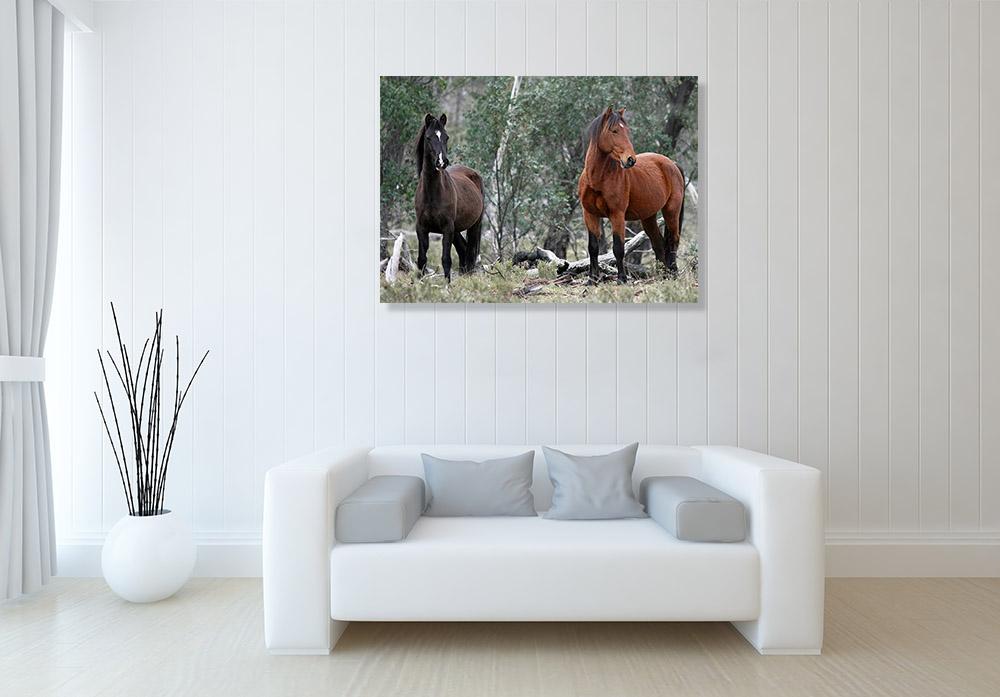Australia Animal Photography Print