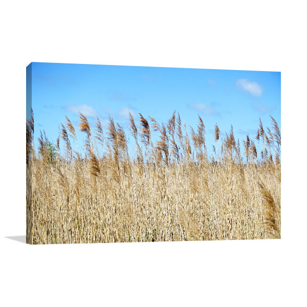 Altona Meadows Art Print Dry Golden Reed