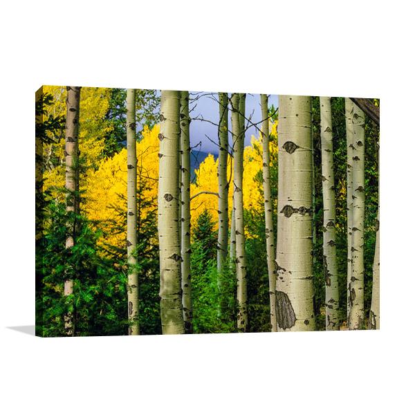 Aspen Grove In Autumn Wall Art Print