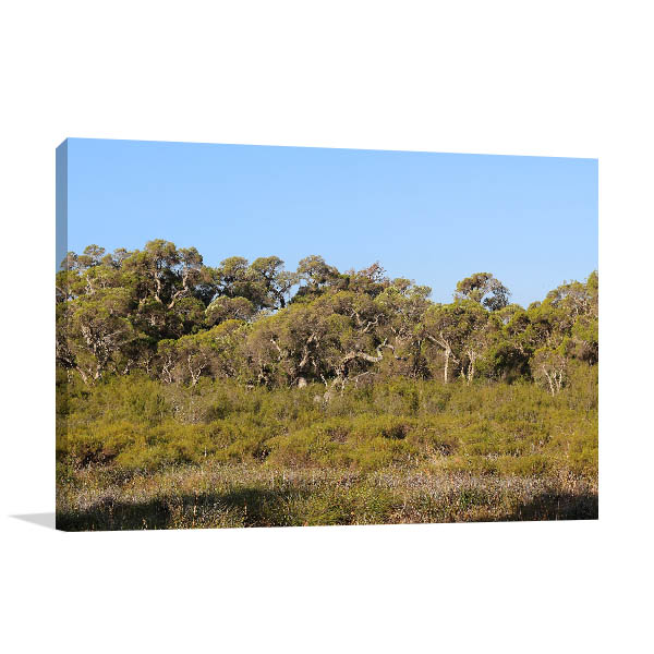 Aubin Grove wall Print Foliage Forest