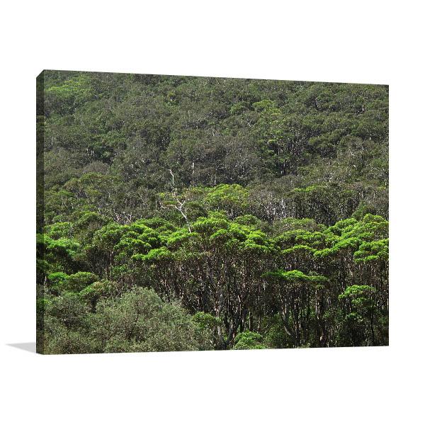Australia Art Print wall Coastal Eucalyptus Forest