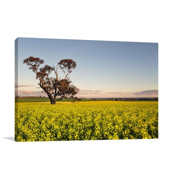 Australia Art Print Golden Canola