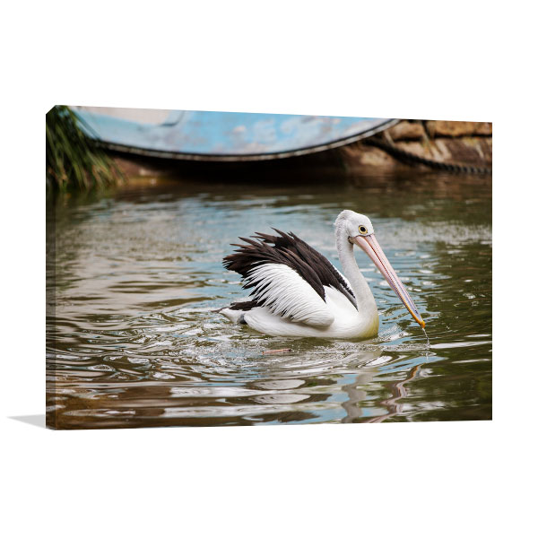 Australia Art photo Pelican Floating
