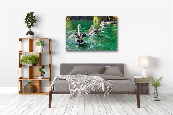 Australian Pelicans Perth Art Prints