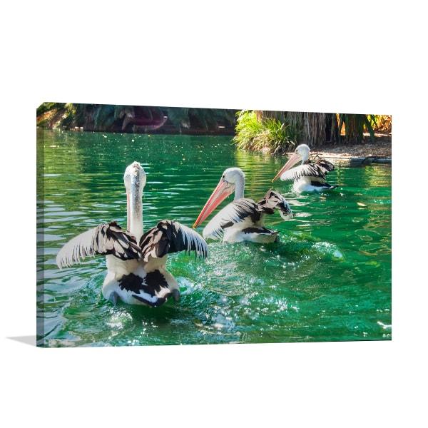 Australian Pelicans Perth Canvas Art