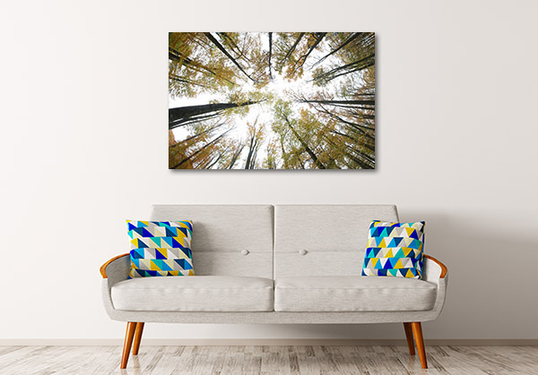 Autumn Beeches Wall Art