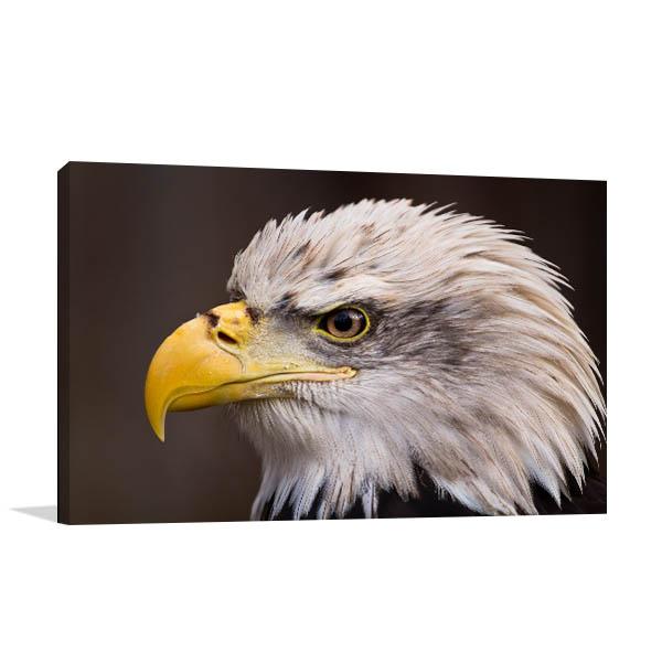 Bald Eagle Wall Art